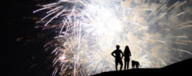 How to keep your dog safe and at ease when the fireworks start