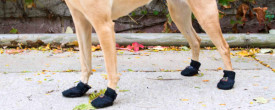Hot Pavement Can Hurt Your Dog's Paws in Minutes. Here's What You Need to Know.